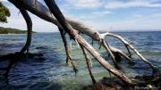 photo marine bois flotte mer arbres nature : Bois flotté