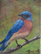 tableau animaux merle bleu amerique oiseau : Le MERLE