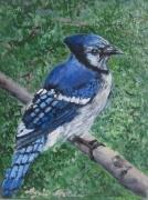 tableau animaux oiseau bleu canada geai bleu : L'oiseau bleu