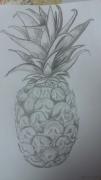 dessin fruits ananas fruits crayon : Exotic