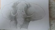 dessin animaux elephant crayon : Sagesse