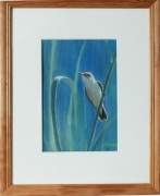 """tableau animaux oiseaux nature pastel animaux : """"Fauvette"""""""