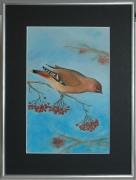 """painting animaux oiseaux nature pastel animaux : """"Jaseur boréal"""""""