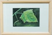 """painting fleurs feuille plante vigne nature : """"Feuille de vigne"""""""