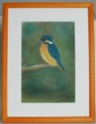 "painting animaux oiseaux nature pastel animaux : ""Martin-pêcheur"""