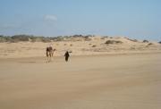 photo paysages desert chameau sable maroc : le désert 1