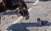 photo animaux ane hydra grece ile : le dialogue