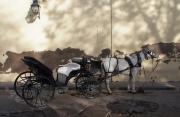 photo scene de genre caleche cordoue andalusie cheval : Calèche de Cordoue 2