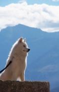 photo animaux chien ciel nuages corse : Je suis beau