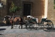 photo scene de genre caleche cordoue espagne cheval : Calèche de Cordoue 1