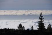 photo paysages tenerife nuages arbres canaries : les Nuages à Tenerife
