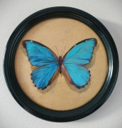 tableau animaux miniature papillon cadre rond : Papillon
