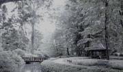 photo paysages lyon pont square arbres : Petit Paradis