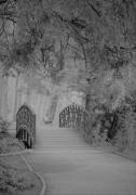 photo architecture pont nature foret : petit pont en foret