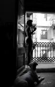 photo terrasse barcelone chien : Anima