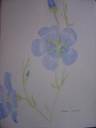 dessin fleurs lin botanique : lin