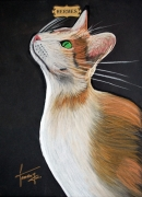 dessin animaux chat dieu collection pastel : Collections 12 chats dieux HERMES