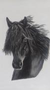 tableau animaux animaux chevaux peinture tableau : Belle crinière noire
