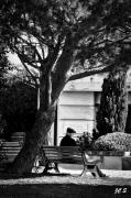 photo personnages retraite provence arbre photo : Auprès de mon arbre