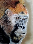 dessin animaux : Mr Kong
