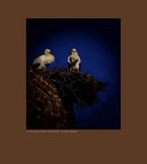art numerique animaux couple amour toujours fidelite love : Cocooning