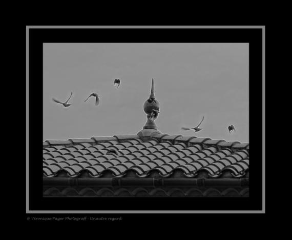 ART NUMéRIQUE envol automne oiseaux monochrome  - L'envol