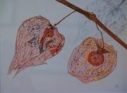 tableau nature morte physalis fleur sechee fleur : Physalis
