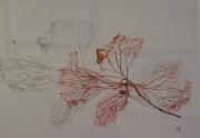 tableau hortensia petale fleur sechee : petale d'hortensia