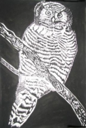painting animaux : owl