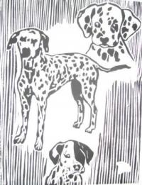 chiens dalmatiens