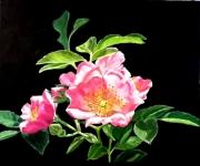 tableau fleurs rose fleur : Rose ancienne