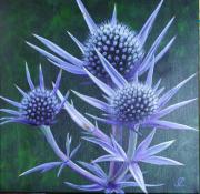 tableau fleurs chardon bleu violet fleur : chardon bleu