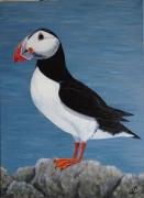 tableau animaux macareux oiseau de mer : macareux 2