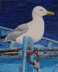 Goeland capitaine de bateau