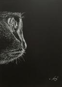 dessin animaux noir et blanc chat lumiere animaux : Le chat