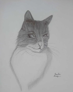dessin animaux pencil portrait drawing : My Cat