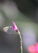 photo autres harmonie papillon fleur rose : papillon rose