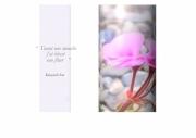 photo fleurs fleur geranium rose haiku texte : fleur blessée