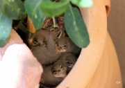 photo animaux oisillons nid douceur printemps : Oisillons