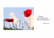 photo fleurs fleurs coquelicots rouge bleu : Vivants