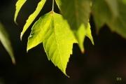 photo autres vert feuille nature fraicheur : feuilles