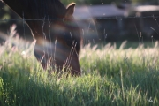 photo animaux cheval herbe rayon soleil harmonie : harmonie