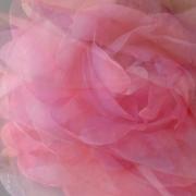 photo fleurs roses aerien parfum tulle : roses mêlées