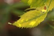 photo autres feuille fraicheur mouvement douceur : feuille au vent