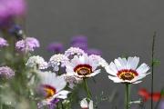photo fleurs fleurs multicolore jardin printemps : fleurs du jardin