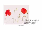 photo fleurs coquelicots haiku texte : coquelicots
