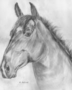 dessin animaux var st raphael cheval tete de cheval : Tête de cheval