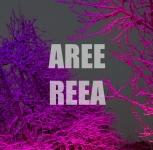 Aree Reea