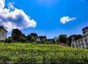 photo paysages montamartre paris vignes paysage : Montmartre - Les Vignes vue Sud