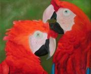 tableau animaux perroquet oiseau nadia peinture : La beauté du perroquet